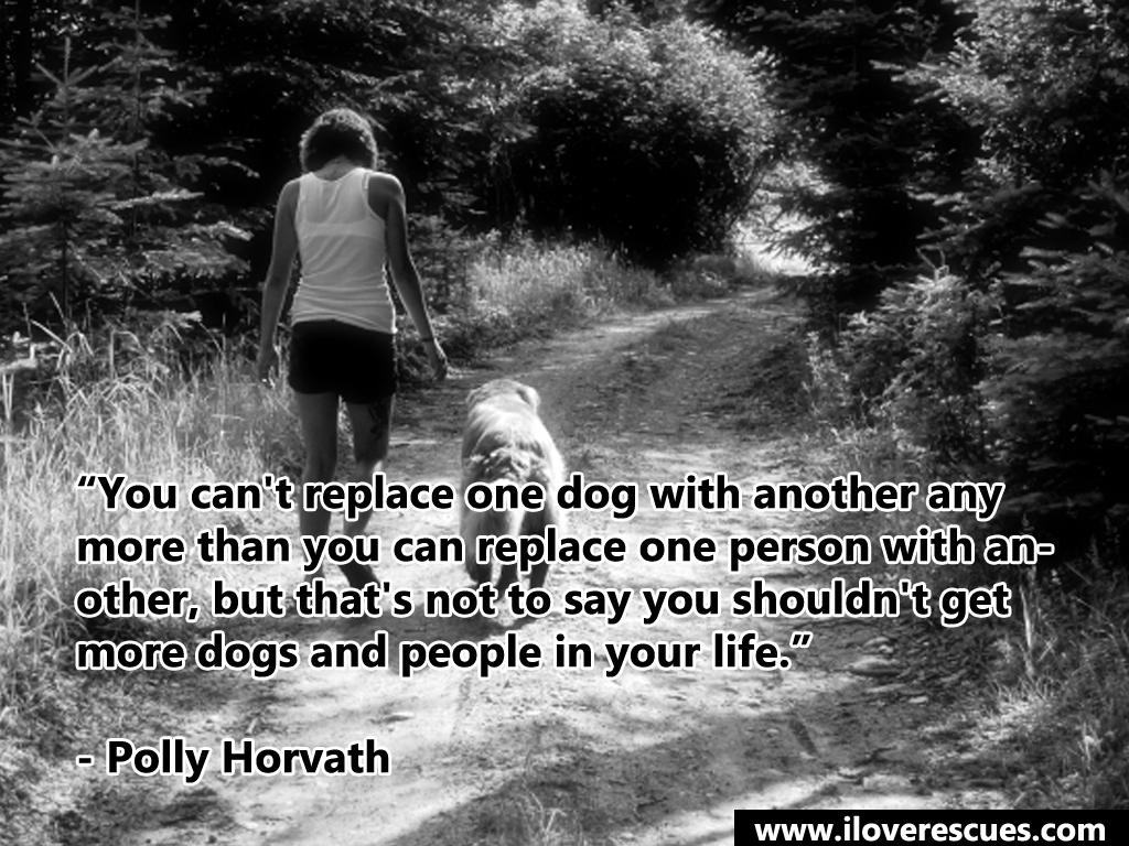 Heartwarming Dog Quotes Quotesgram