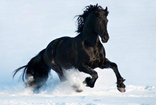 Horses In The Snow Quotes Quotesgram
