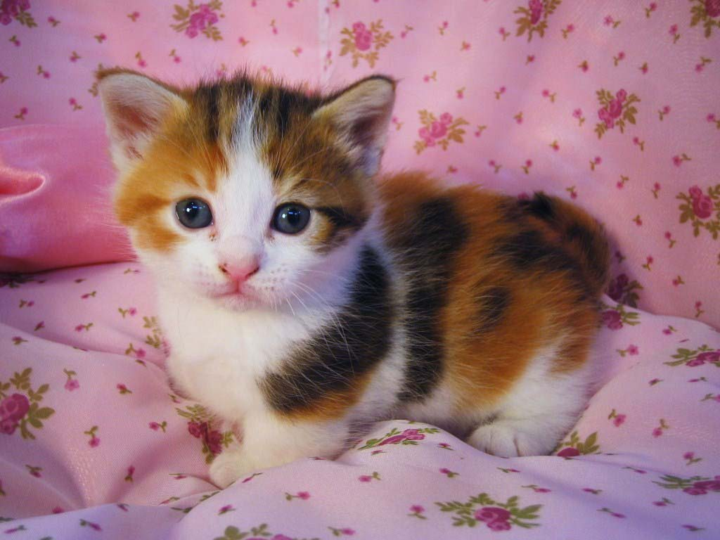 25 Cute Cat Images With Quotes For Crazy Cat Ladies ... |Cute Kittens Quotes