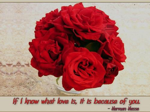 Red Rose Love Quotes. QuotesGram