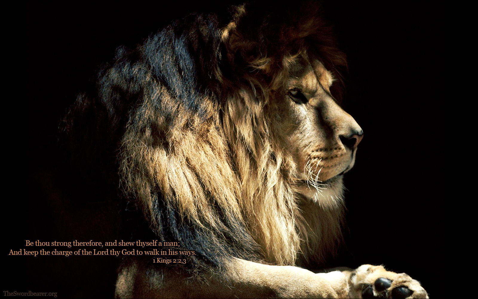 Lion Quotes And Sayings Strong Lion Quotes Wal...