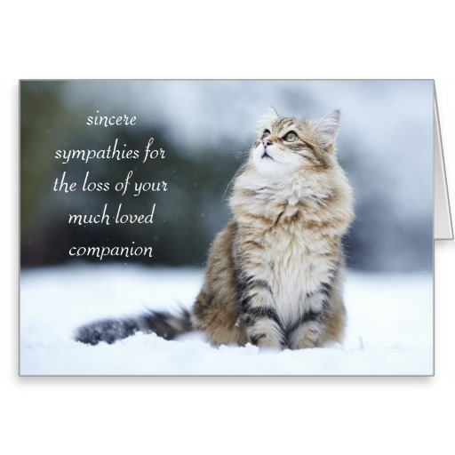 Sympathy Messages For Loss Of Pet Cat