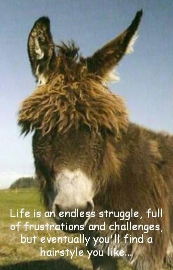Mule Sayings Quotes. QuotesGram