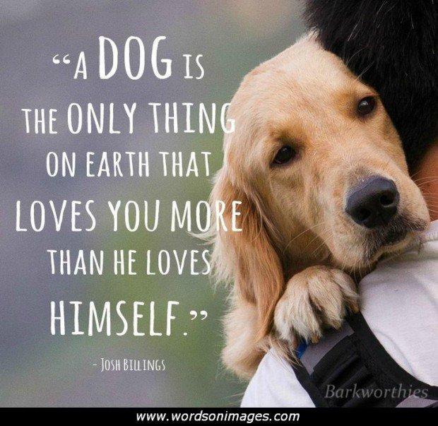 Pet Love Quotes. QuotesGram