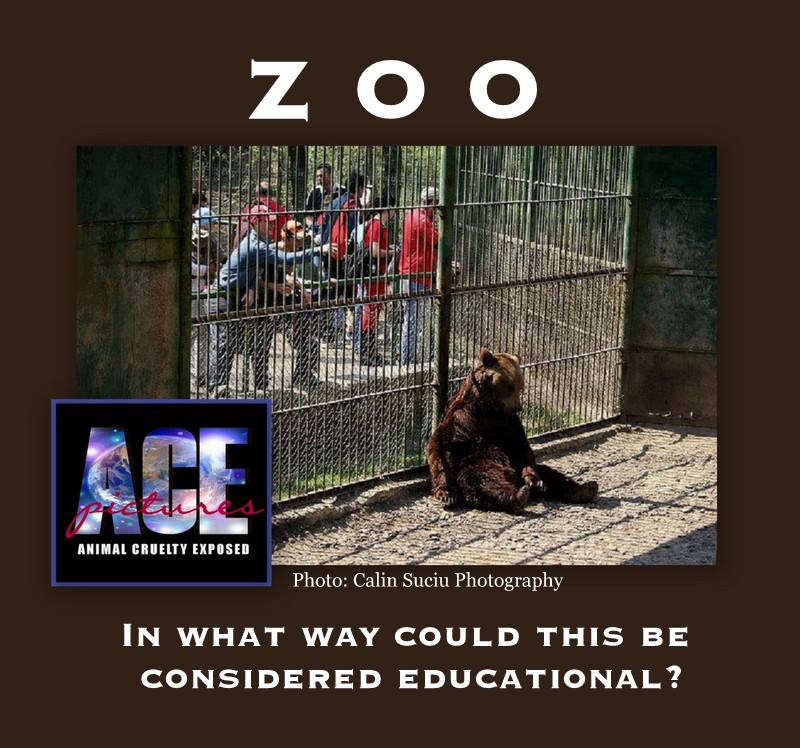 are our zoos cruel to wild animals essay