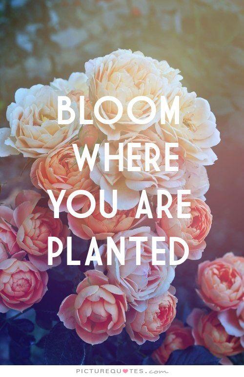 bloom inspirational quotes quotesgram