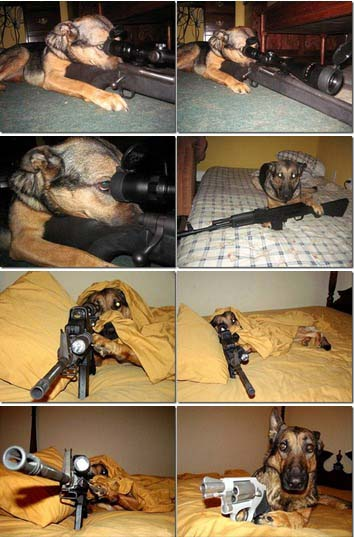 Funny Pics Of Dogs With Guns Gun Dog Quotes. Quotes...