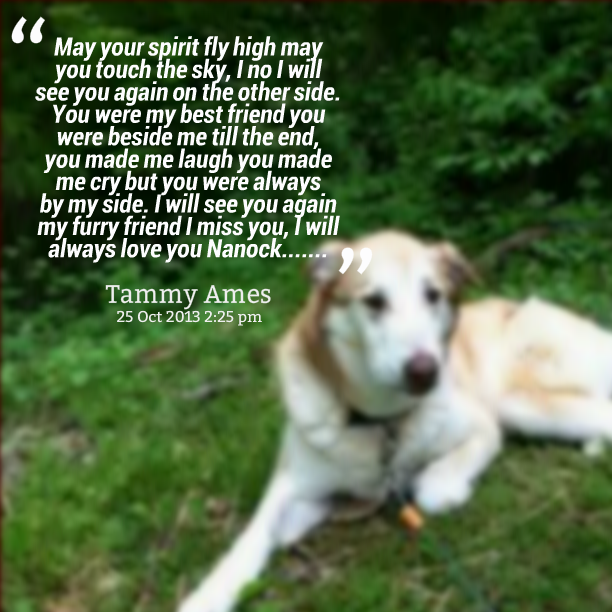 My Dog Is My Best Friend Quotes. QuotesGram