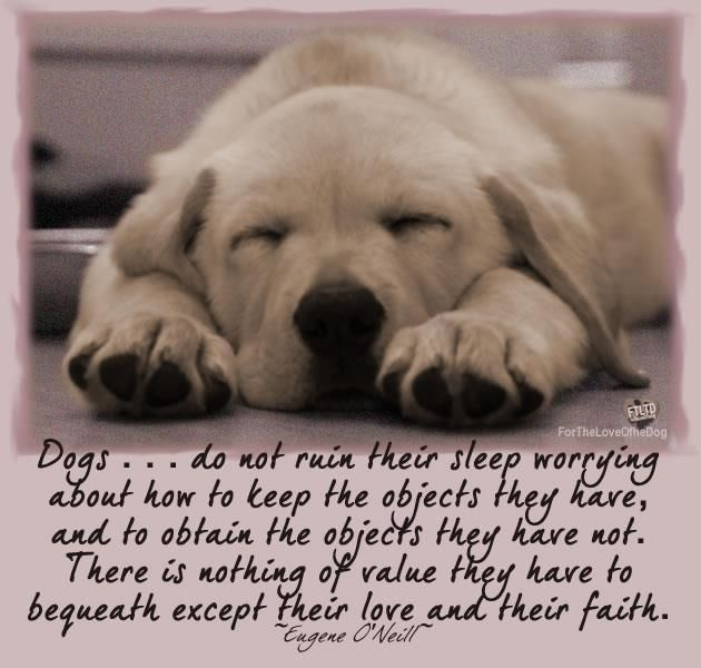 Puppy Sleeping Quotes