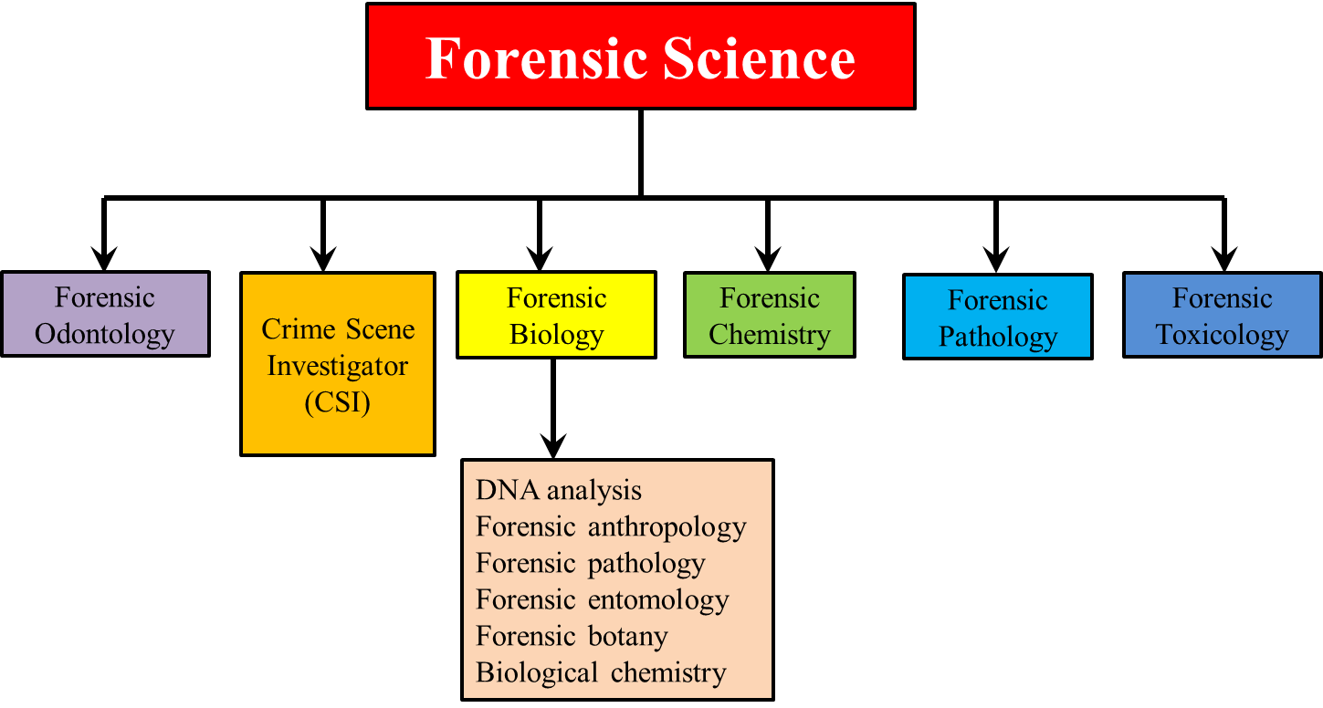 the forensic science A career guide for becoming a forensic science technician including requirements, common tasks, and salary.