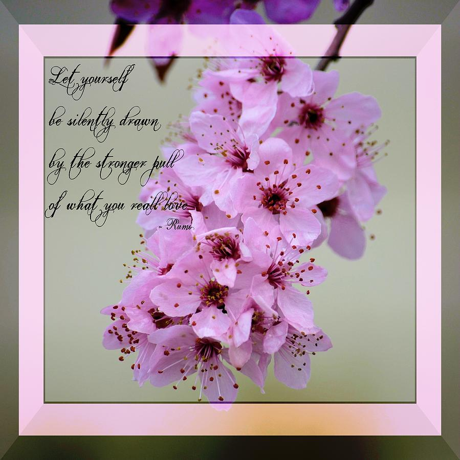 Spring Blooming Quotes Quotesgram