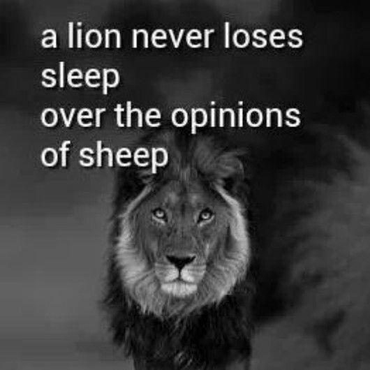 Lion Sheep Quote: Dont Be A Sheep Quotes. QuotesGram
