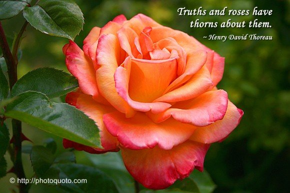 quotes about death and roses quotesgram