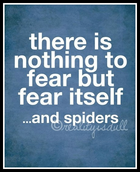 Witty Quotes With Pictures: Funny Pictures And Quotes About Fear Of Spiders. QuotesGram