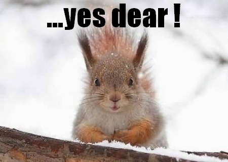 Funny Quotes About Squirrels. QuotesGram
