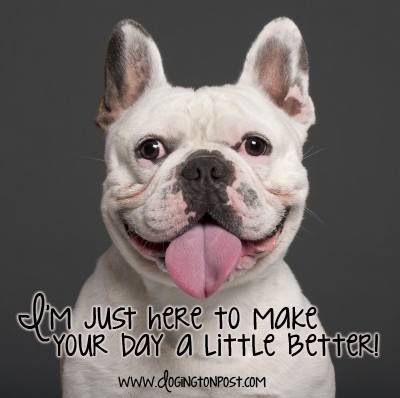Cute Dog Quotes And Sayings. QuotesGram