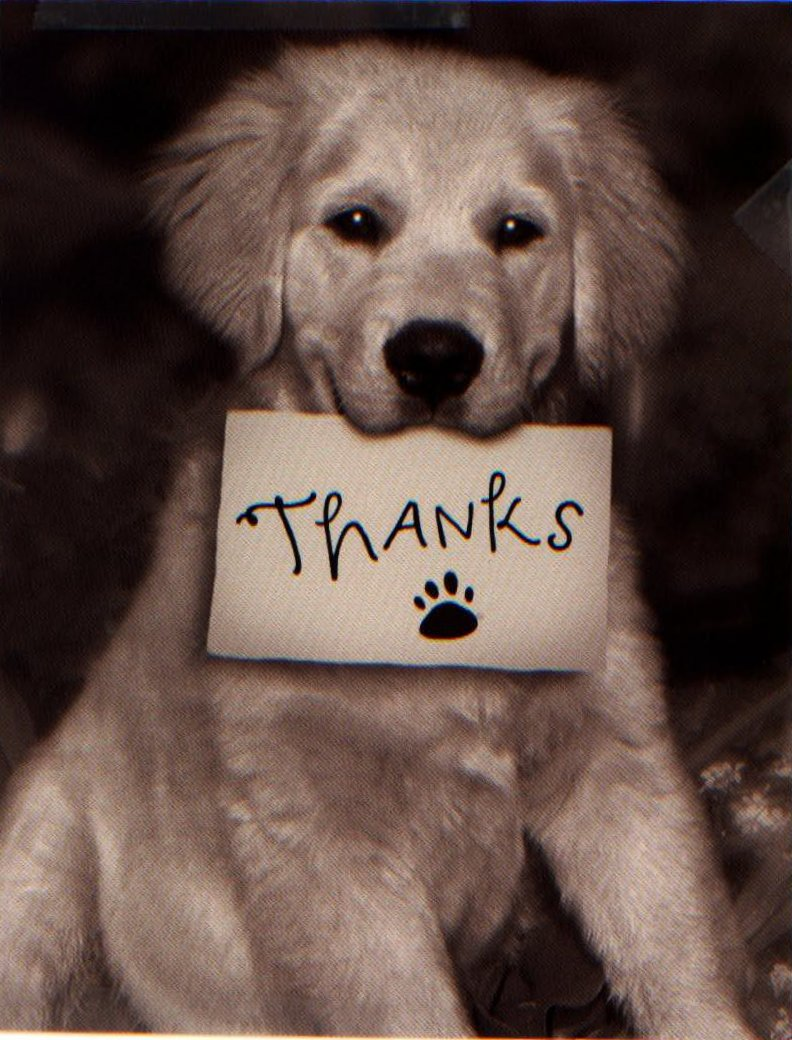 Thank You Dog Quotes Quotesgram
