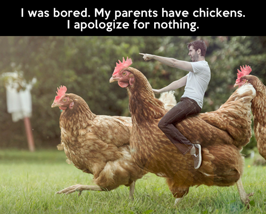 Funny Chicken Quotes. QuotesGram