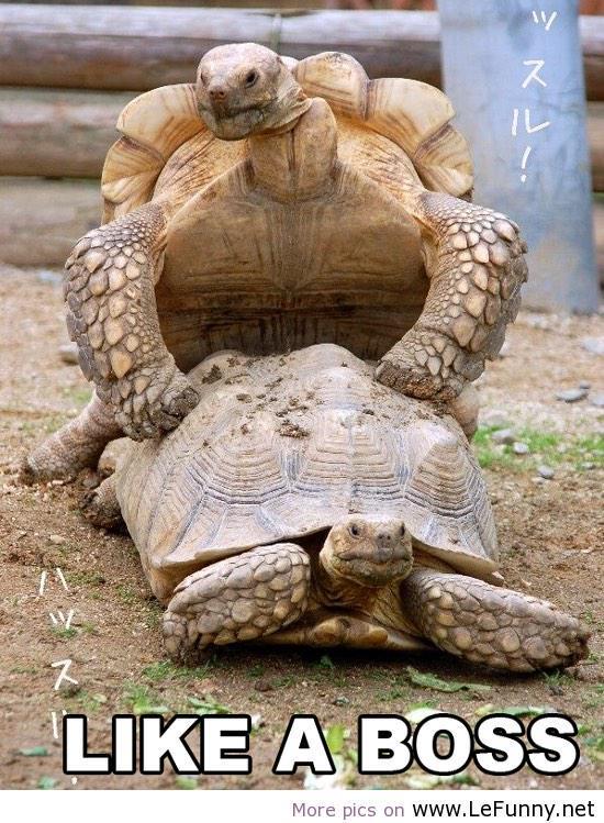 Turtle funny - photo#36