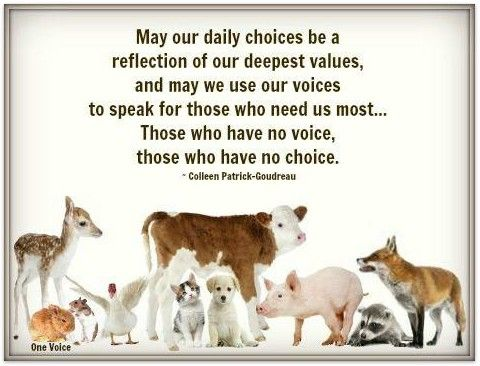 Quotes About Compassion For Animals Quotesgram