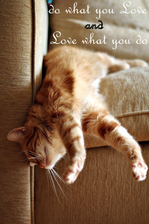 cute cat quotes quotesgram