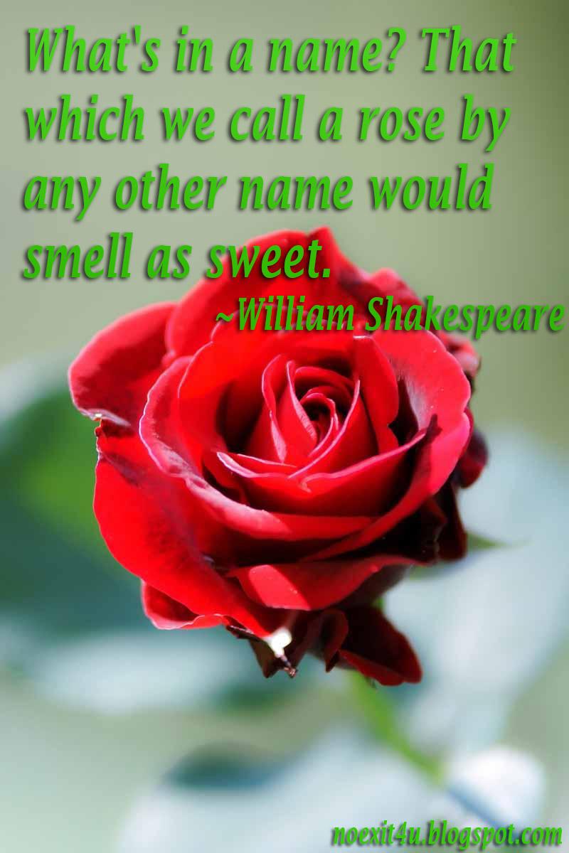 Rose Quotes Quotesgram