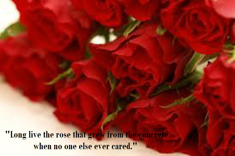 Love Quotes With Beautiful Roses Quotesgram