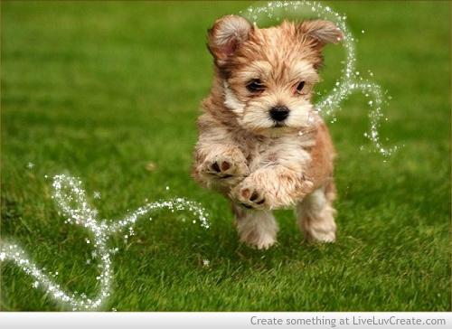 Cute Dog Love Quotes. QuotesGram