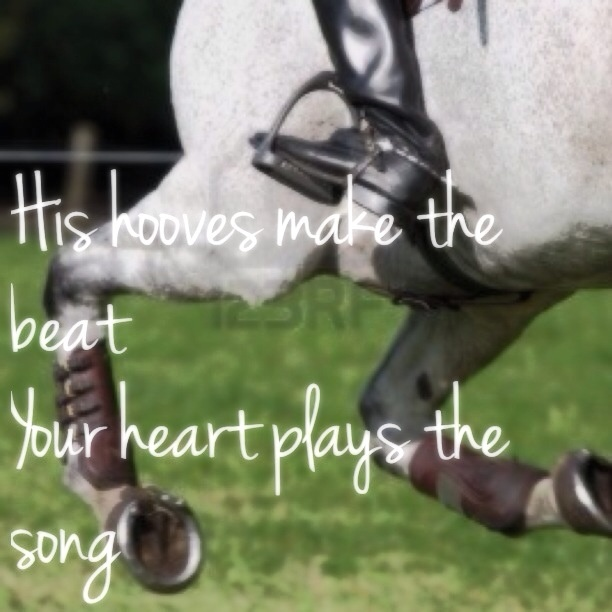 Horse And Rider Bond Quotes Quotesgram