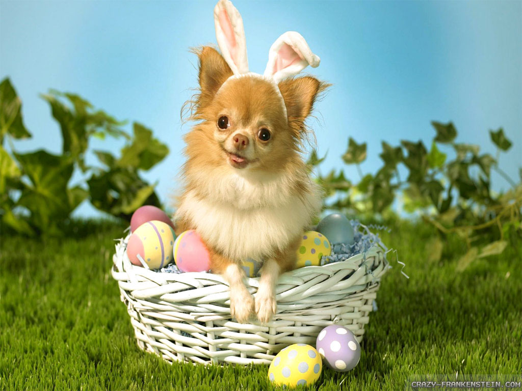 Easter Bunny Funny Quotes. QuotesGram