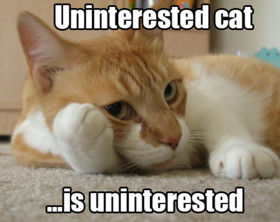 Funny Quotes About Cat Lovers : Funny Cat Lover Quotes. QuotesGram