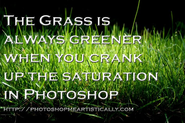 Grass Is Always Greener Quotes: Grass Is Greener Quotes Funny. QuotesGram