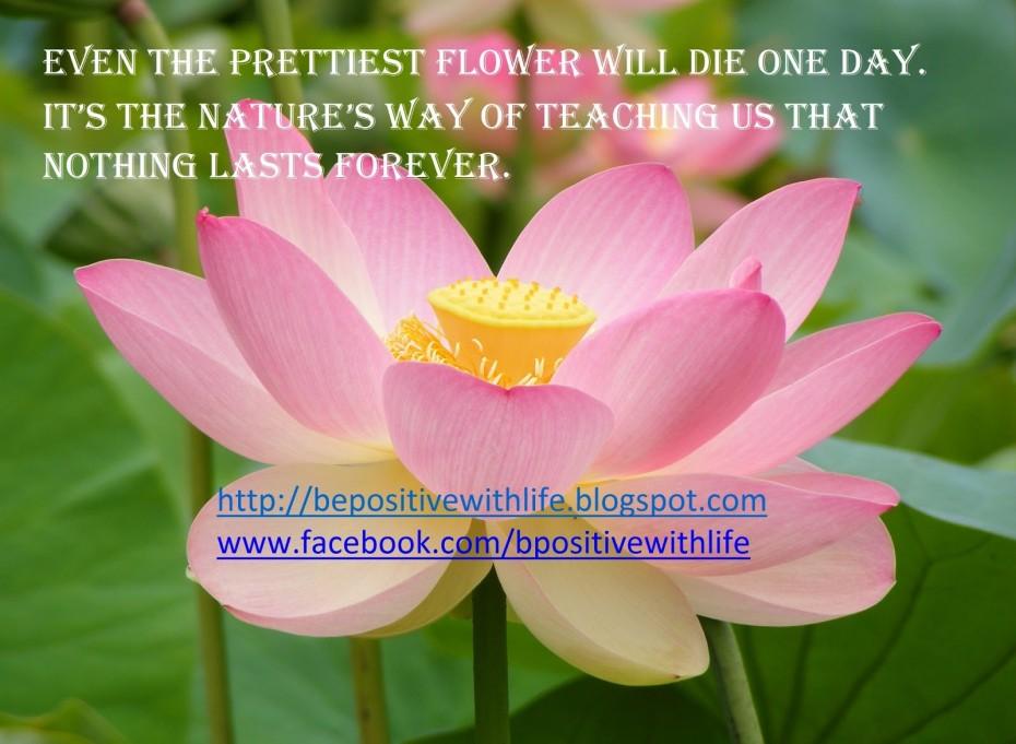 beautiful flower quotes quotesgram