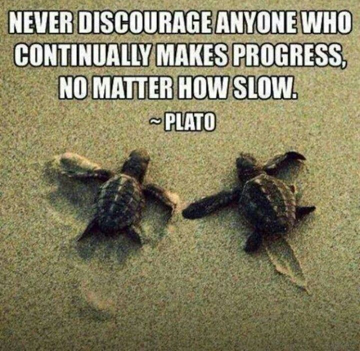 Pin by ROMA on Turtles   Turtle love, Tortoise turtle, Turtle  Turtle Love Sayings