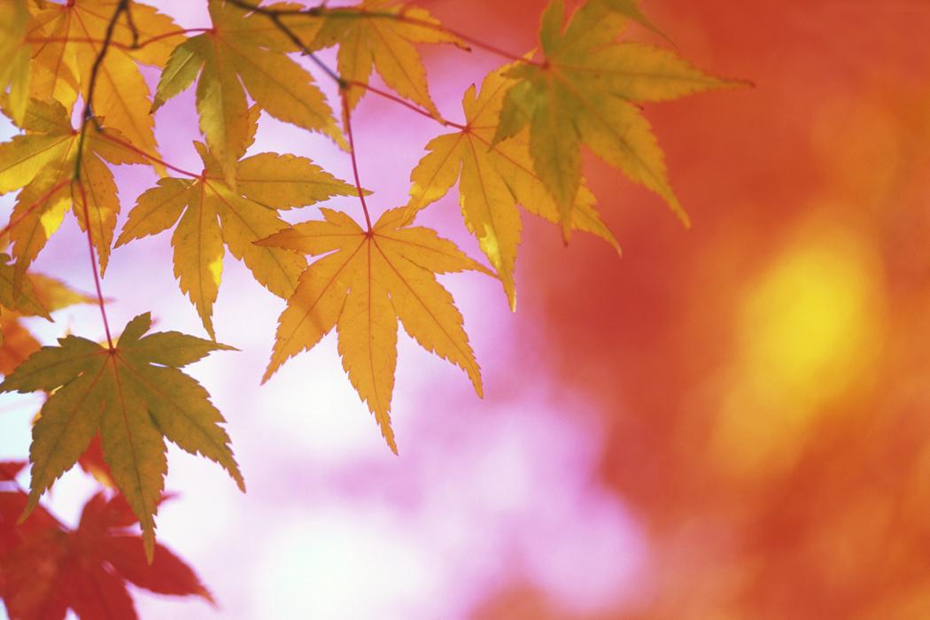 Autumn Birthday Quotes. QuotesGram