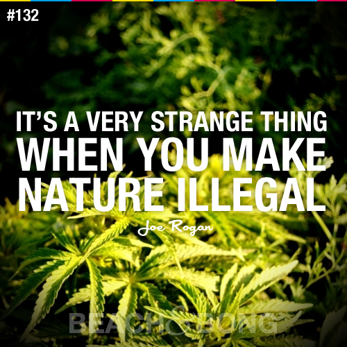 quotes about life and weed quotesgram