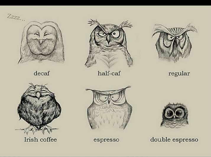 Night Owl Quotes. QuotesGram