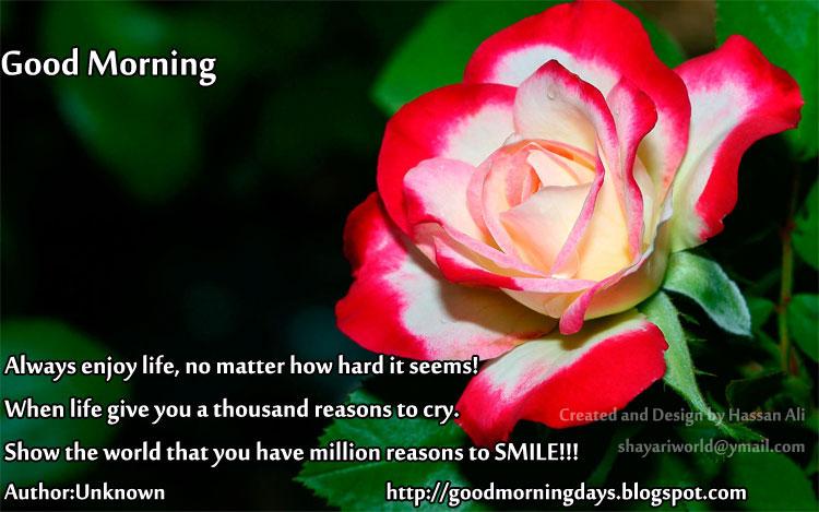 Good Morning Love Quotes Quotesgram