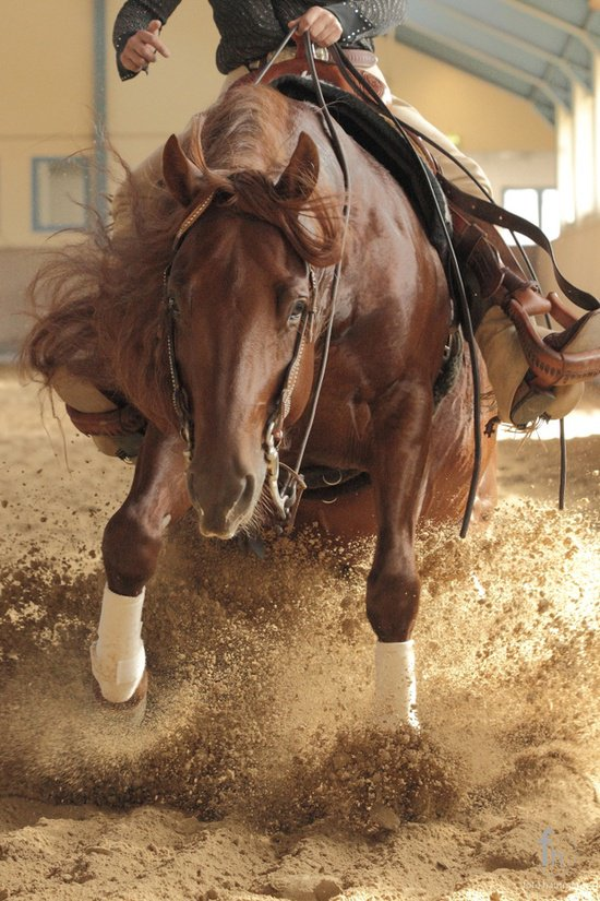 quotes about horse reining quotesgram