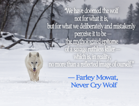 a literary analysis of never cry wolf The boy who cried wolf nintendo switch  where can i find a literary analysis written about the tone in  the year of when the story takes place is never.
