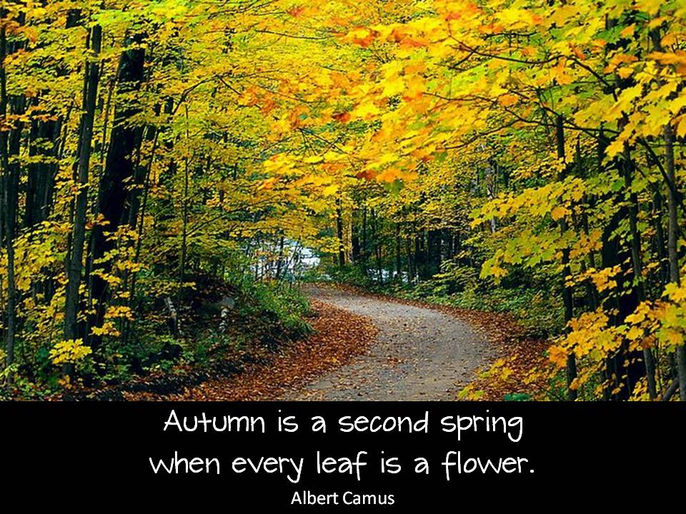 Fall Spring Quotes. QuotesGram