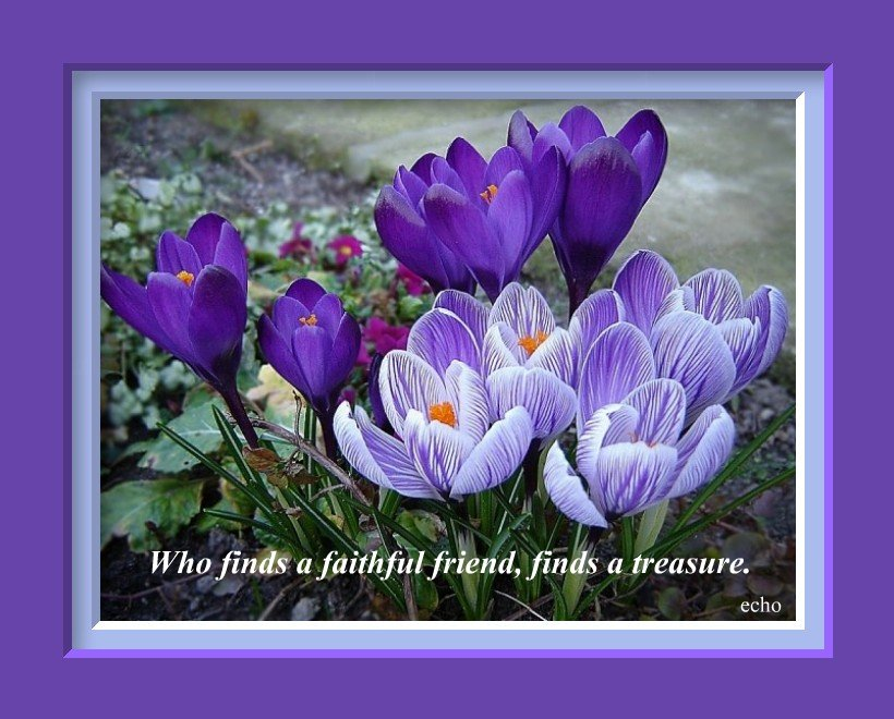 flower quotes about friendship quotesgram
