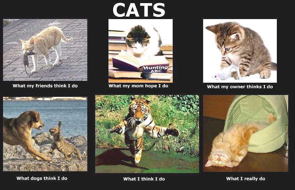 Funny Cat Lover Quotes