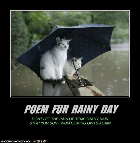 Quotes About Rainy Days: Rainy Day Quotes Funny Animals. QuotesGram