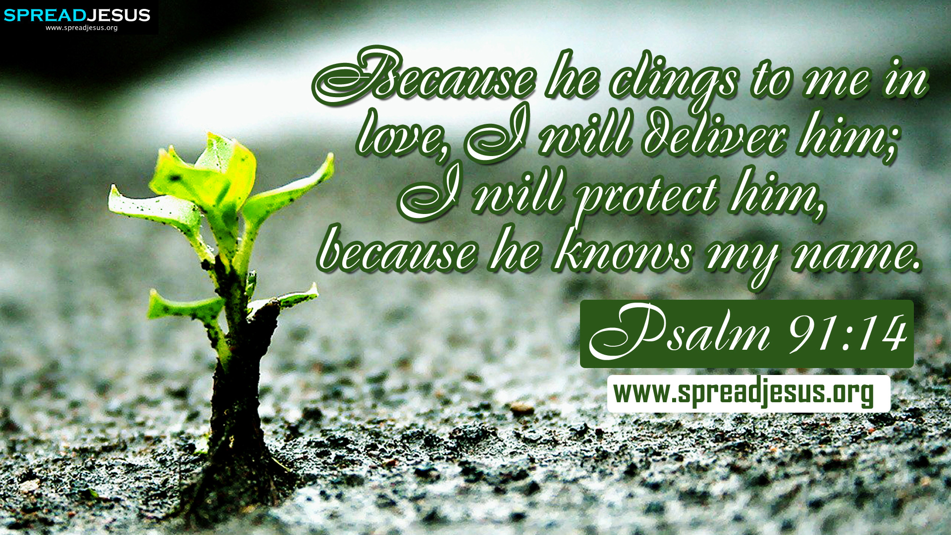 Bible Quotes: Bible Quotes Psalm 91. QuotesGram