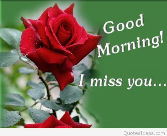 Look - Morning Good friend with roses pictures video