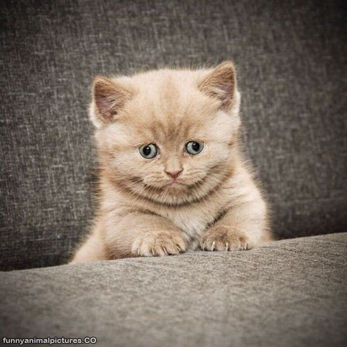 Weird Cat Faces Strange Animal Quotes....