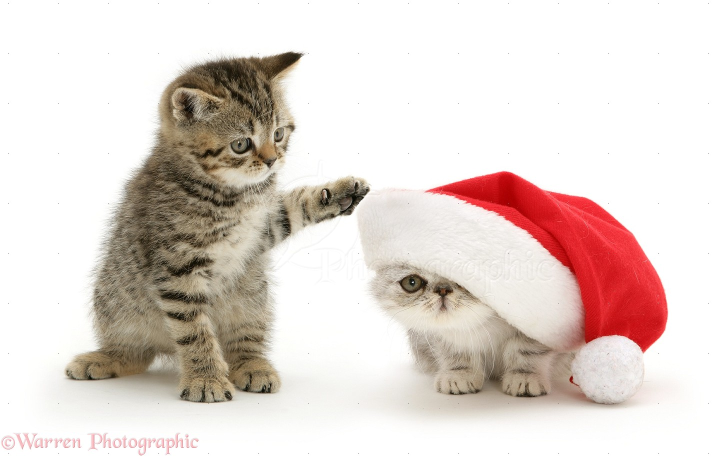 Cute Christmas Quotes Quotesgram: Cute Christmas Animal With Quotes Gallery. QuotesGram