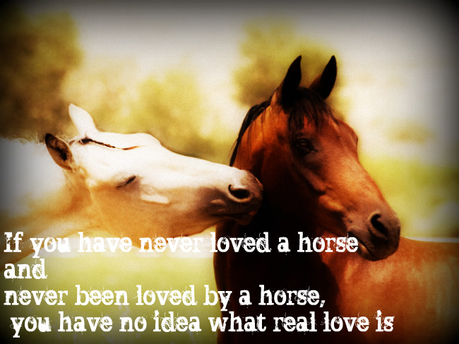 Quotes About Love Horse. QuotesGram