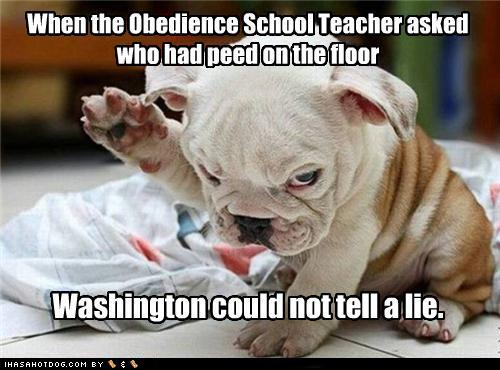 Funny Obedience Quotes. QuotesGram